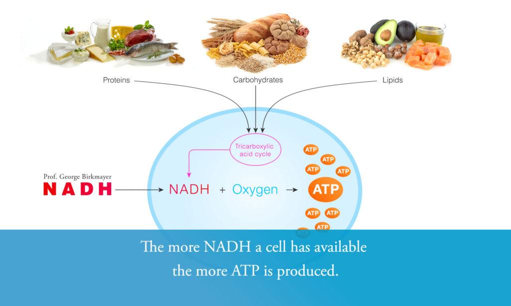 Princip vzniku ATP